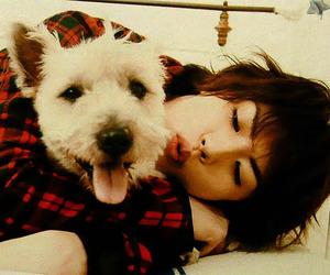 asian, dog, and japan image