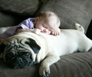dog, baby, and pug image
