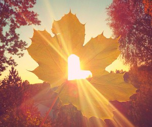 autumn, heart, and leaves image