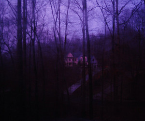 forest and purple image