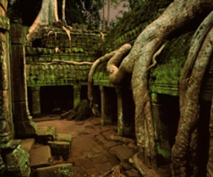 roots, moss, and ruins image