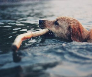 dog, photography, and vintage image