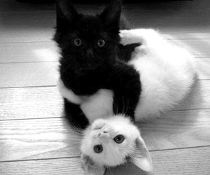cat, kitten, and black image