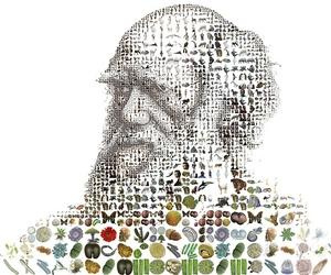 darwin, design, and mosaic image