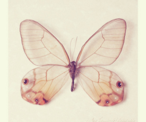 beautiful, butterfly, and vintage image