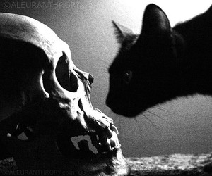 cat, skull, and black and white image