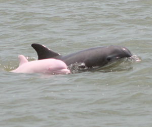 dolphin, pink, and ocean image