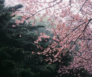 cherry blossom and forest image