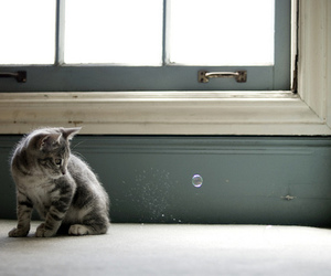 cat, cute, and bubble image