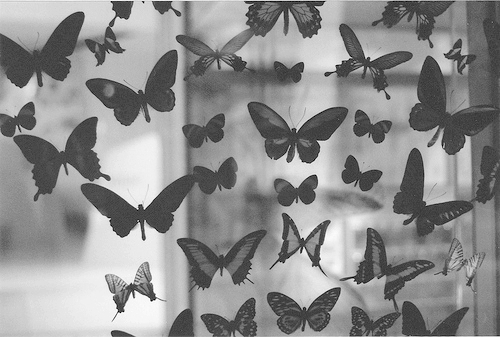 Black-and-white-butterflies-lovely-magnificent-favim.com-502198_large