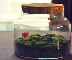 mushroom and jar image