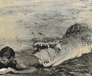crocodile, black and white, and man image