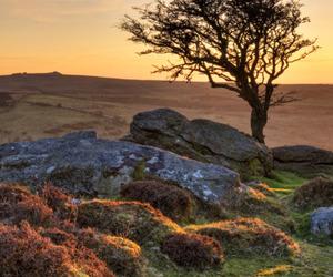rocks, sunset, and tree image