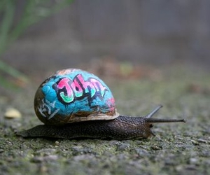 Inner city snail - a slow-moving street art project