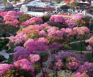 paraguay, flowers, and nature image