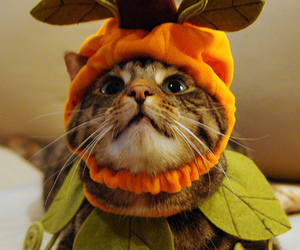 cat, cute, and costume image