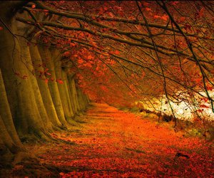 autumn, street, and woods image