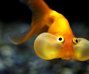 fish, animal, and funny image