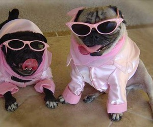 dogs and pugs image
