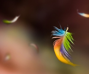 feather, rainbow, and colorful image
