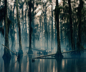 bayou, picture, and fog image