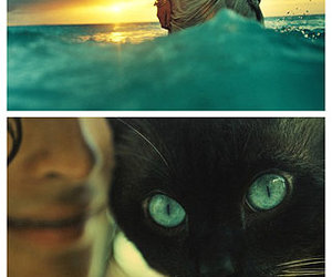 blue, cat, and sea image