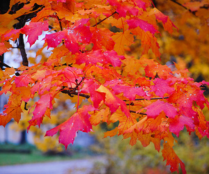 leaves, photography, and autumn image