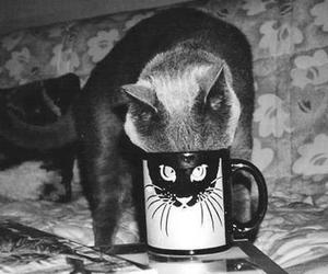 cat, animal, and cup image