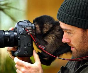 animals, funny, and chimps image