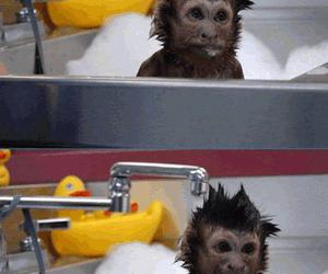 monkey, funny, and water image