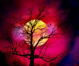 tree, moon, and pink image
