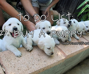 puppy, to do list, and cute image