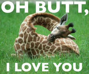 butt, giraffe, and funny image