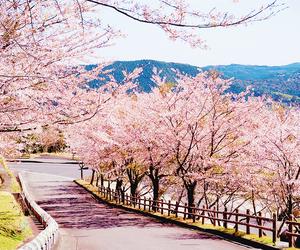 beautiful and sakura image
