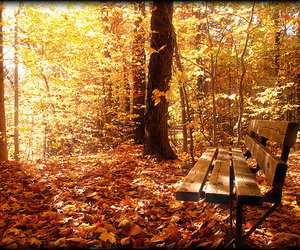 autumn, bench, and landscape image