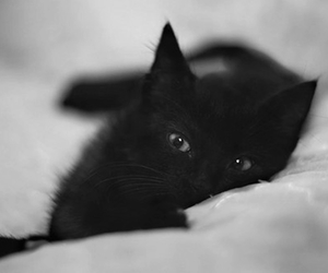 cat, black and white, and black cat image