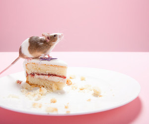 cake and mouse image
