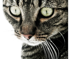 eyes, feline, and snow image