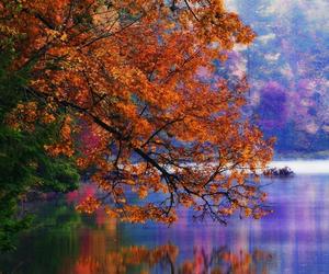 autumn, brilliant, and Dream image