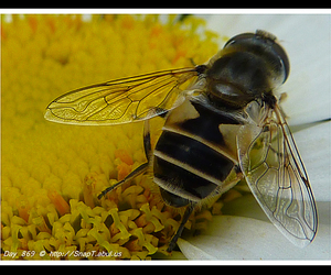 flower photography, close up photography, and hoverfly image