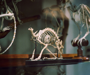skeleton, vintage, and animal image