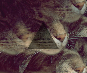 cat, melancholy, and three image