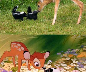 bambi, flowers, and nature image