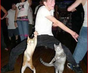 cats, dancing, and happy image