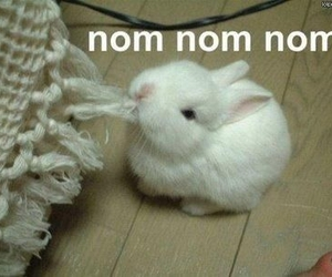 bunny, cute, and nom image