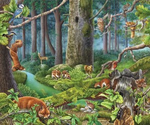 forest, woods, and woodland animal drawing image