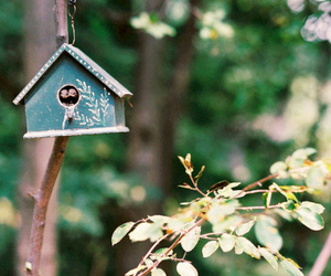 bird, nature, and house image