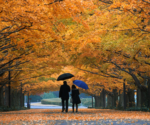 couple, fall, and tree image