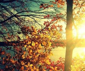 autumn, tree, and sun image