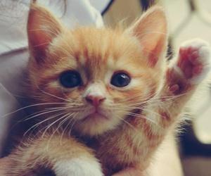amazing, cat, and eyes image